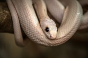 本物の白蛇のとぐろ